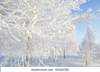 Frozen trees and branches . Beautiful white winter. Blue sky.