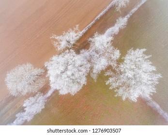 Frozen trees in Montmarault, Allier, Auvergne-Rhone-Alpes, France