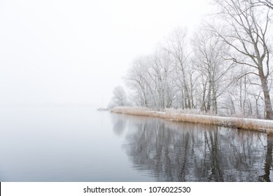 Frozen trees on the foggy shore of the Nieuwe Meer lake in Amsterdam, the Netherlands.