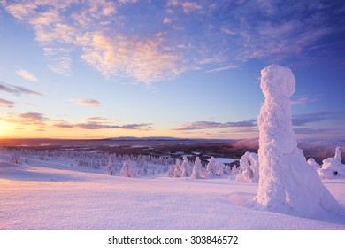 Frozen trees on top of the Levi Fell in Finnish Lapland. Photographed at sunset.