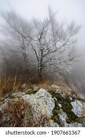 Frozen trees on top of the Zlaty Vrch in Luzicke hory, Czech republic. - Shutterstock ID 1907661367