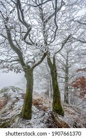 Frozen trees on top of the Zlaty Vrch in Luzicke hory, Czech republic. - Shutterstock ID 1907661370