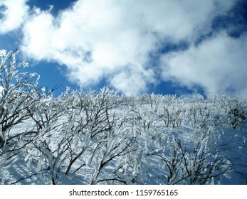 Frozen trees in The Orchard at Mount Hotham