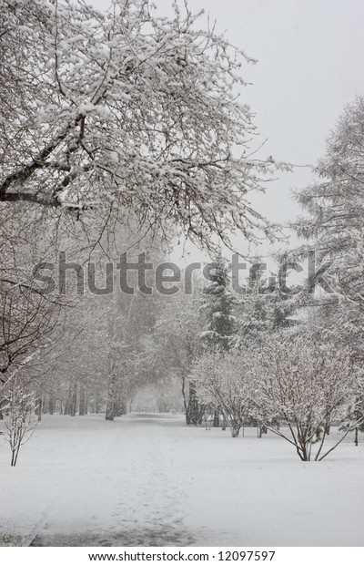 frozen trees in park during snowfall