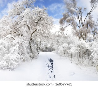 Frozen Trees And Rural Road In The Park