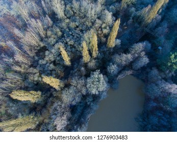 Frozen trees in Theillay, Loir-et-Cher, France