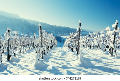 Frozen vineyards