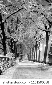 Frozen walkway pavement sidewalk in Augsburg Bavaria Germany Europe in winter with trees in black and white