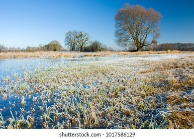 Frozen water in the meadow, hoarfrost on the grass and trees without leaves