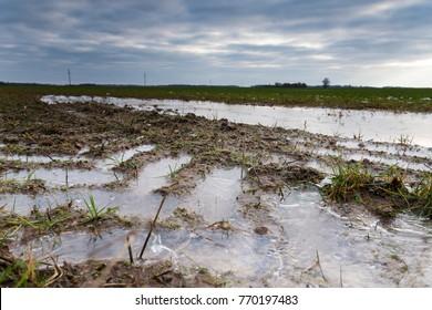 Frozen water on wet wheat field in late autumn.