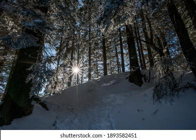 frozen winter forest in Naturpark Gantrisch