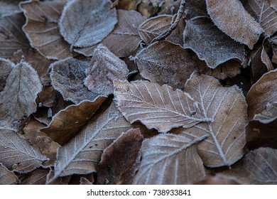Frozen winter leafs