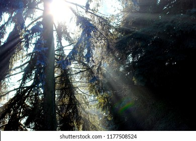 Frozen winter tree in forest with sun rays