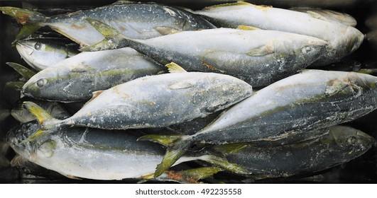 Frozen yellowtail or amberjack fish at fish market