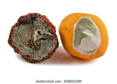 Fruit, apple and orange, moldy, on a white background