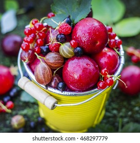 Fruit background. Ripe berries and fruits in a yellow bucket. Plums, black currants, red currants, gooseberries, peaches, raspberries.