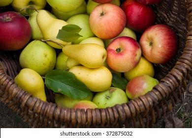 fruit basket apples pears