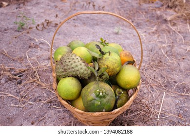 fruit basket with graviola and orange. The simplicity of country life, a place where you do not have to have all the money in the world. Delicious green and fresh, mouthwatering fruits!