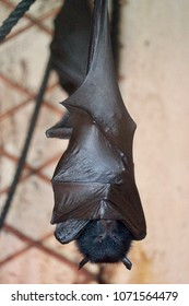 a fruit bat sleeping on a branch