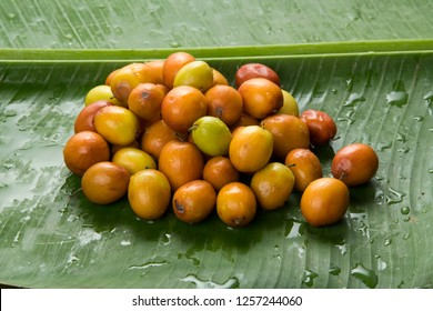 Fruit : Close up of Brown Indian Jujube Isolated on Green Banana Leaf Background Shot  in Studio
