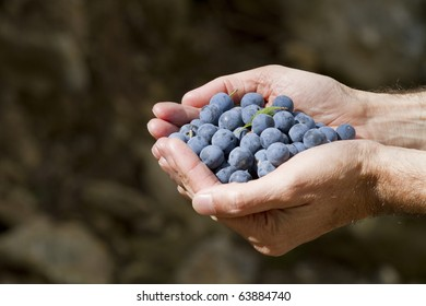 Fruit of endrin in the hands of man