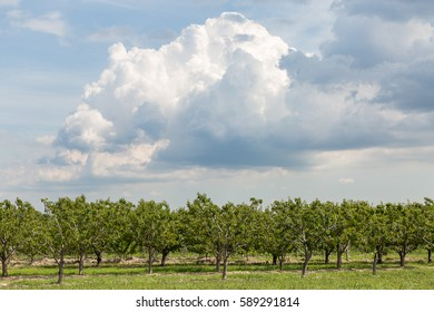 Fruit field
