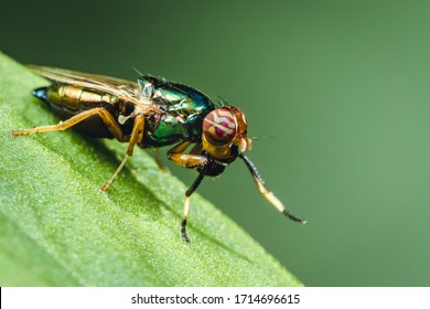 A fruit fly on top of a leaf