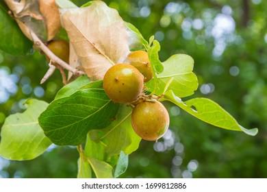Obst im Wald ist Nahrung für Vögel.