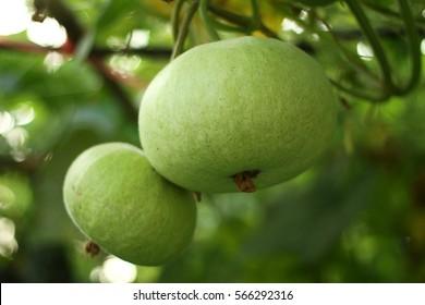 Fruit gourd