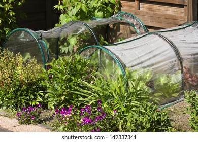 Fruit- and grocery plants in small greenhouses to cultivate by children in a corner of the garden