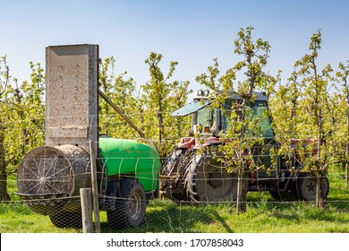 Fruit grower spraying his fruit trees to protect them from pests.