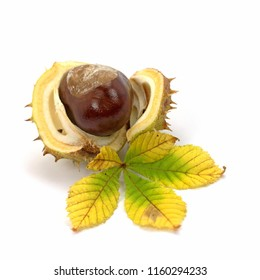 Fruit of the horse chestnut on white background