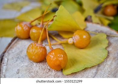 Fruit and leaves of the Ginkgo Biloba tree, fall season harvest.