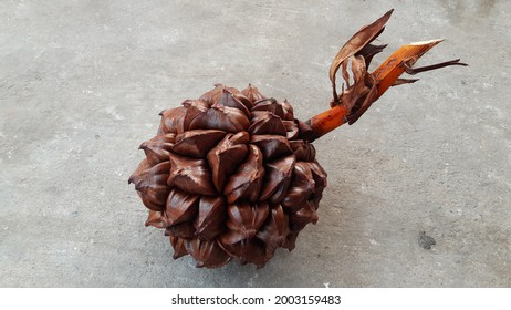 Fruit of Nypa fruticans known as the nipa palm (or simply nipa) isolated on concrete background.