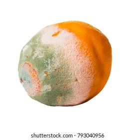 fruit orange covered with mildew on white isolated background