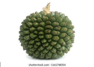 Fruit of Pandanus utilis on white background