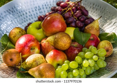 Fruit picking at the end of the summer - apples, pears and grapes