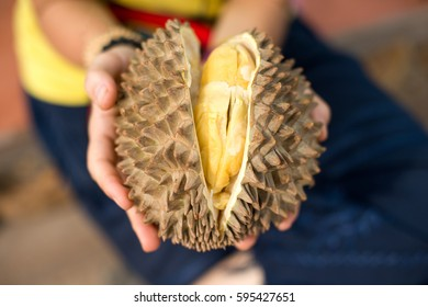 Fruit of a ripe durian in the hands of a durian fruit in close-up hands