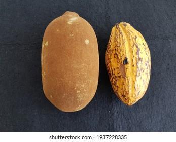 Cupuaçu fruit (Theobroma grandiflorum) and Cacao bean, (Theobroma cacao)  Malvaceae family.