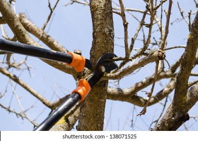 fruit tree cut trim prune with two handle clippers scissors in spring garden on background of blue sky.