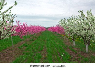 fruit tree farm