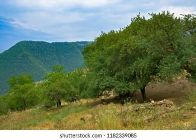 Fruit trees in mountains. Summer day. Horizontal shot