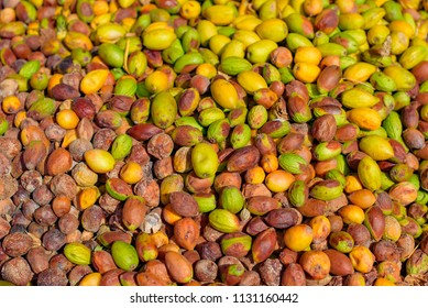 the fruits of the argan tree