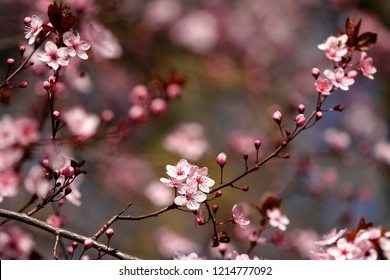 Fruits blossom in spring, april