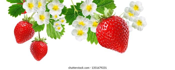 fruits garden strawberry
