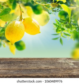 Fruits in Lemon garden with copy space on aged wooden table