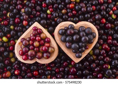 Fruits of wild grapes on different backgrounds (Vaccinium meridionale)