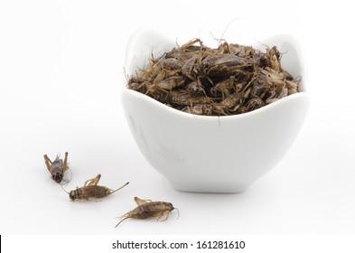 Fry Acheta domesticus insect menu.