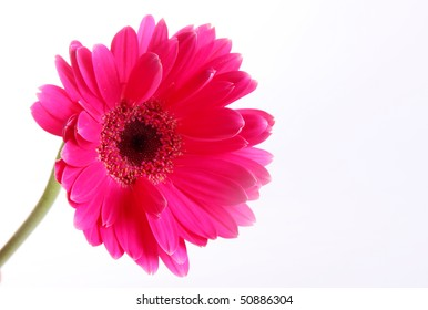 Fuchsia flower over white background. Nature image. Space to insert text or design