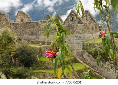 Fuchsia orchid in the foreground and the Inca citadel of Machu Picchu among the thick fog in the background, Cusco, Peru